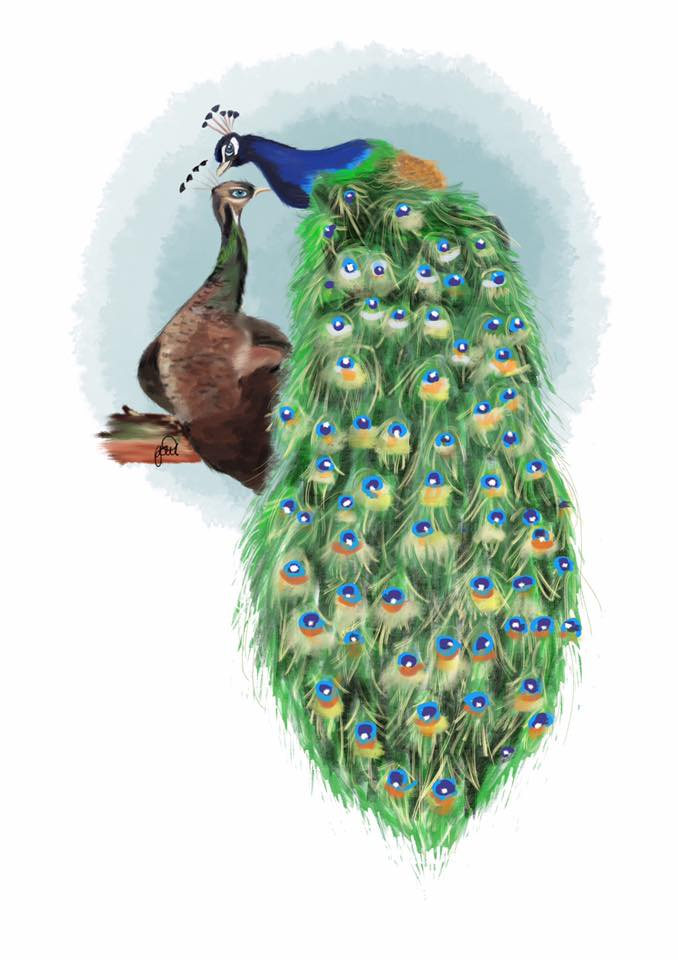 Painting of peacock and peahen by Gail Armstrong